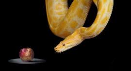 snake-1322240_1280