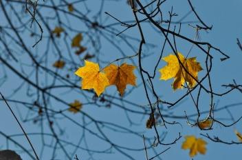 leaf-1209841_1280