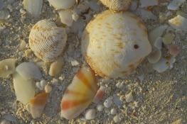 shells-546344_1280
