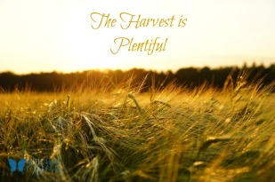 harvest-is-plentiful